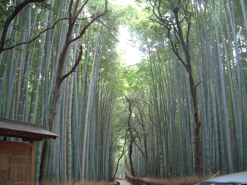 嵐山で人力車に乗ろう!値段や時間・おすすめ観光コースをご紹介!