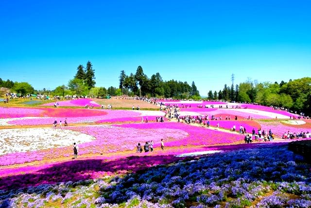 秩父「羊山公園」の営業時間は?アスレチックや芝桜の見頃など楽しみ方を紹介!