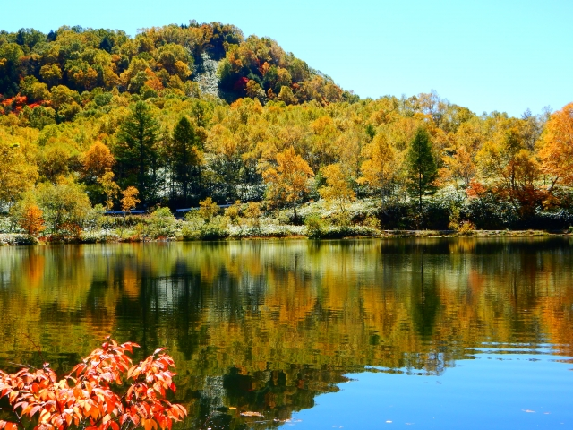 志賀高原の紅葉の見ごろは?おすすめの時期やドライブコースも紹介!