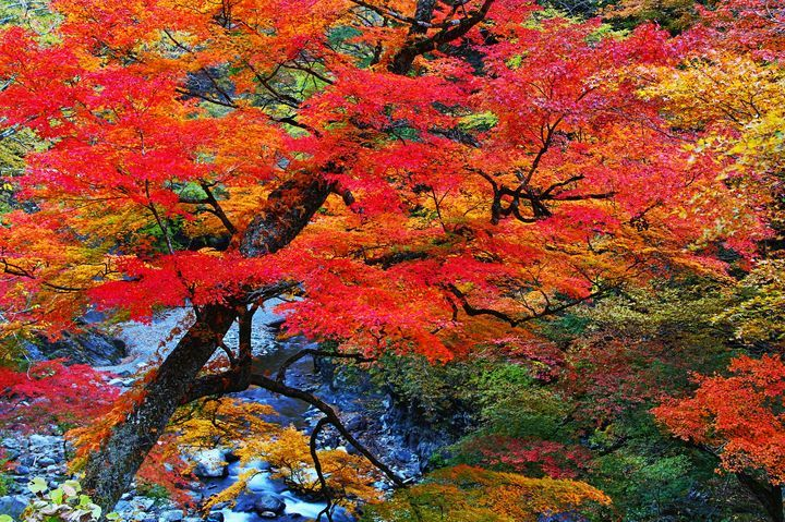 中津峡は紅葉が美しい奥秩父の名所!アクセス方法や見頃をまとめて紹介!