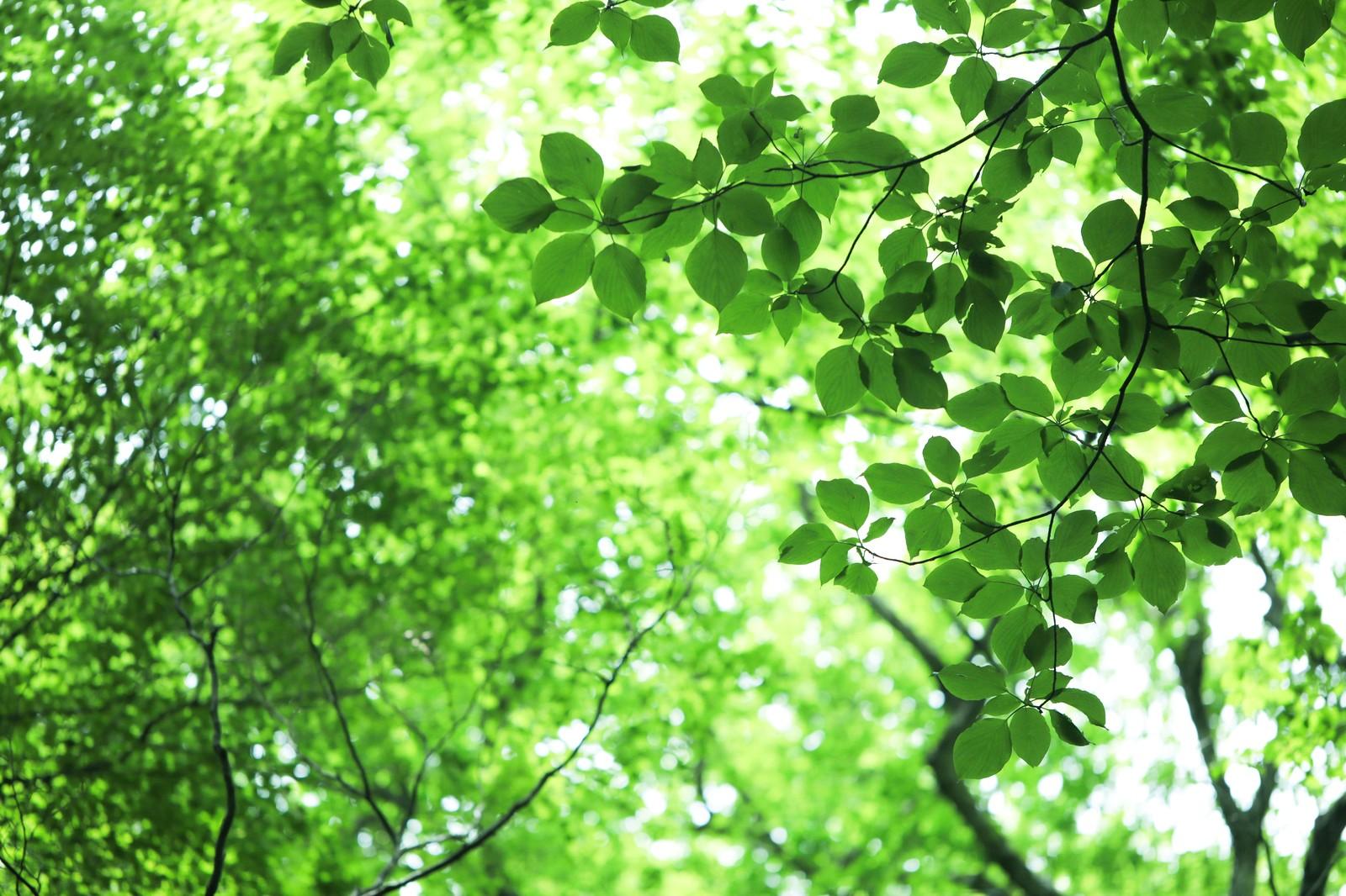 「樹ガーデン」は鎌倉で話題の天空カフェ!まるでラピュタの世界のようで神秘的!