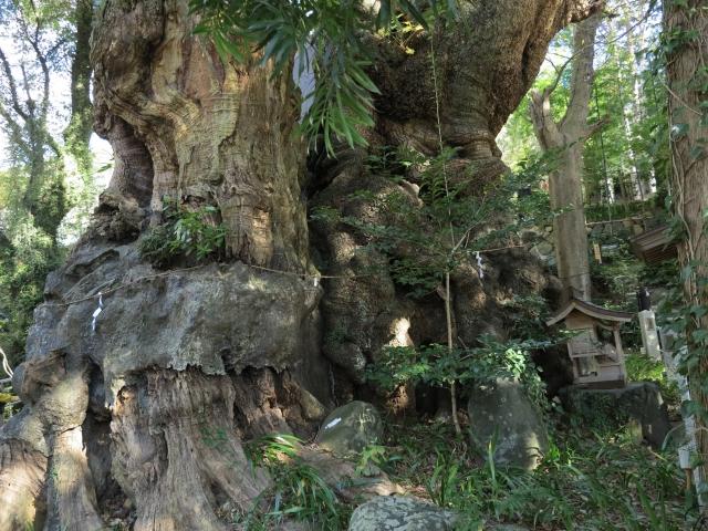 「来宮神社」のご利益は?熱海のパワースポットは大楠で有名!