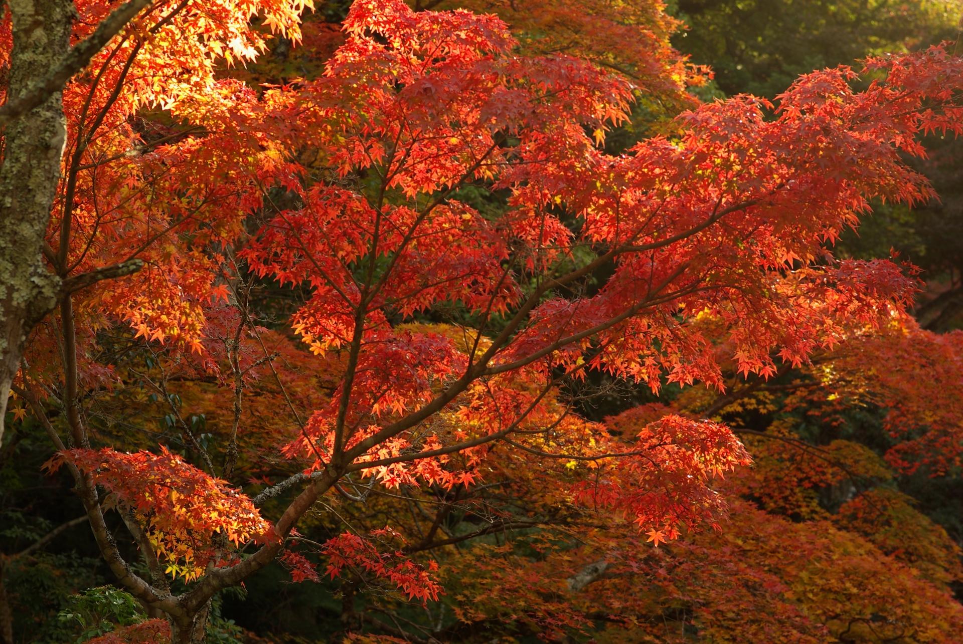 六甲山紅葉の紹介!ライトアップは勿論アクセスやドライブで楽しめる情報も!
