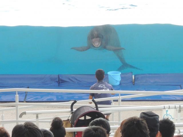 オキちゃん劇場は沖縄で大人気のイルカショー!料金や場所など楽しみ方をガイド!