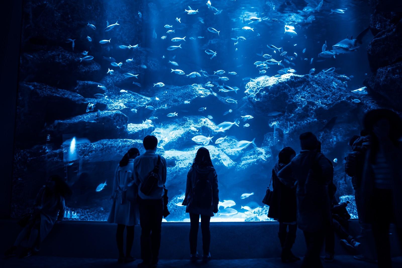 サケのふるさと千歳水族館は淡水魚展示で有名!入場料・時間や見どころまとめ!