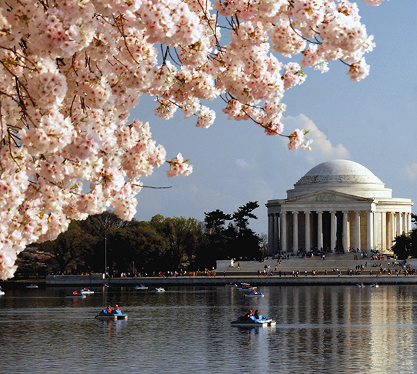 ワシントンDCは桜の名所!桜祭りの時期やおすすめの見所を調査!