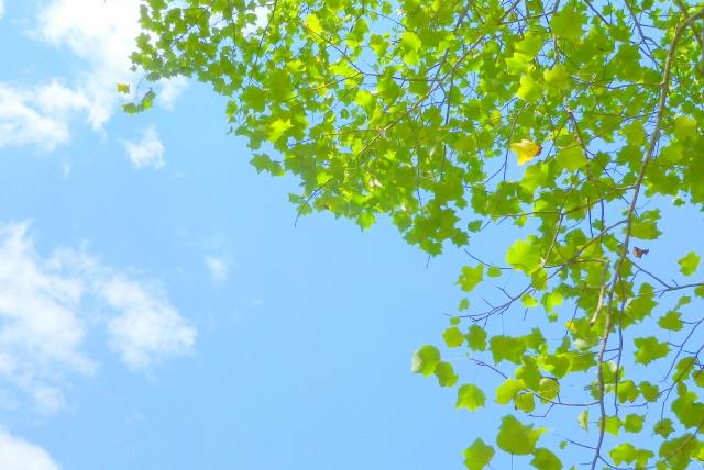 吾妻山公園の菜の花や桜の見頃は?駐車場やアクセス情報もチェック!
