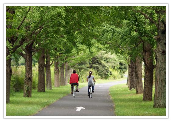 多摩湖自転車道のサイクリングとカフェ巡りが楽しい!距離はどれくらい?