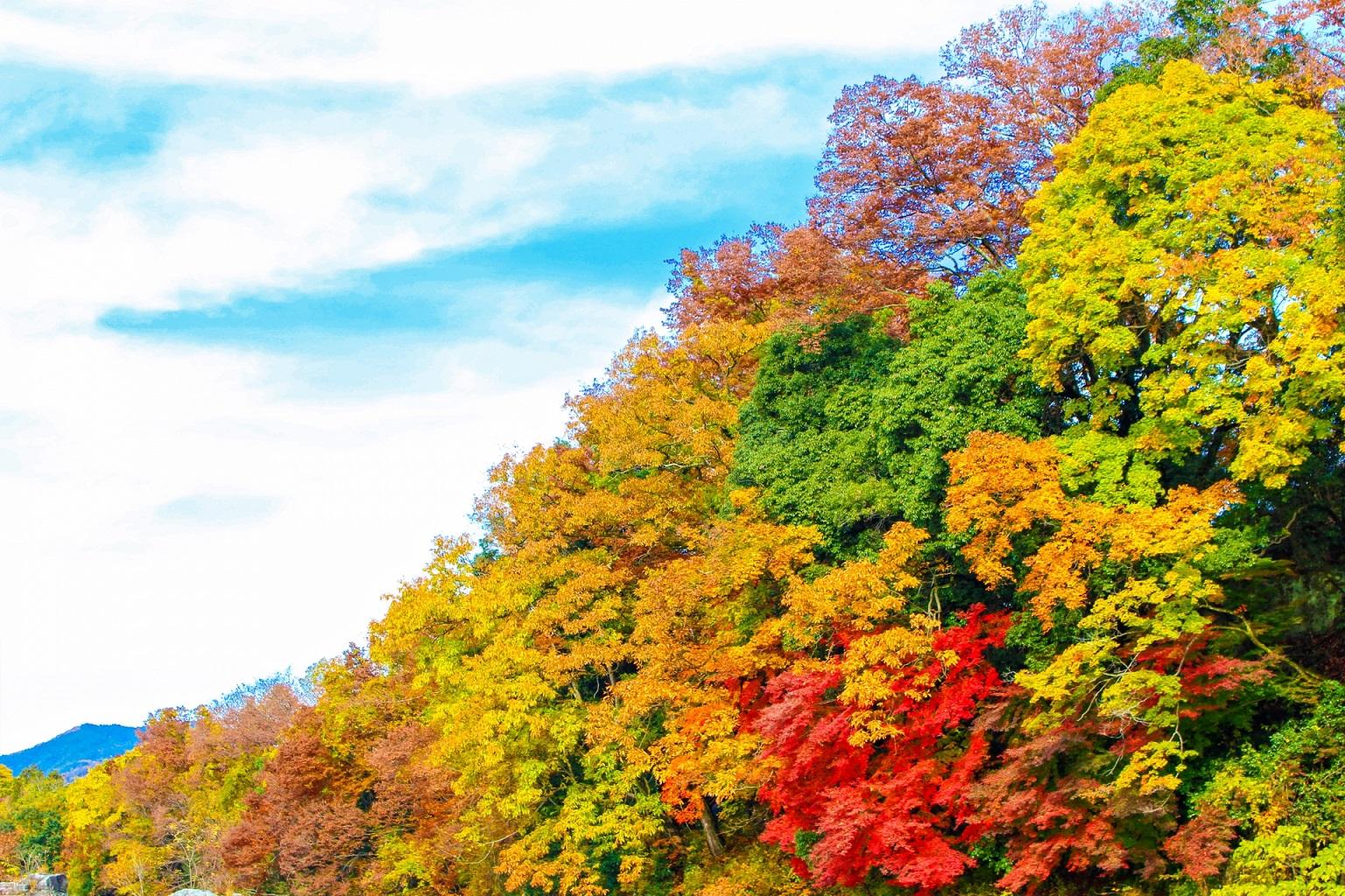 城ヶ倉大橋からの絶景がおすすめ!紅葉が人気スポットの見どころ紹介!