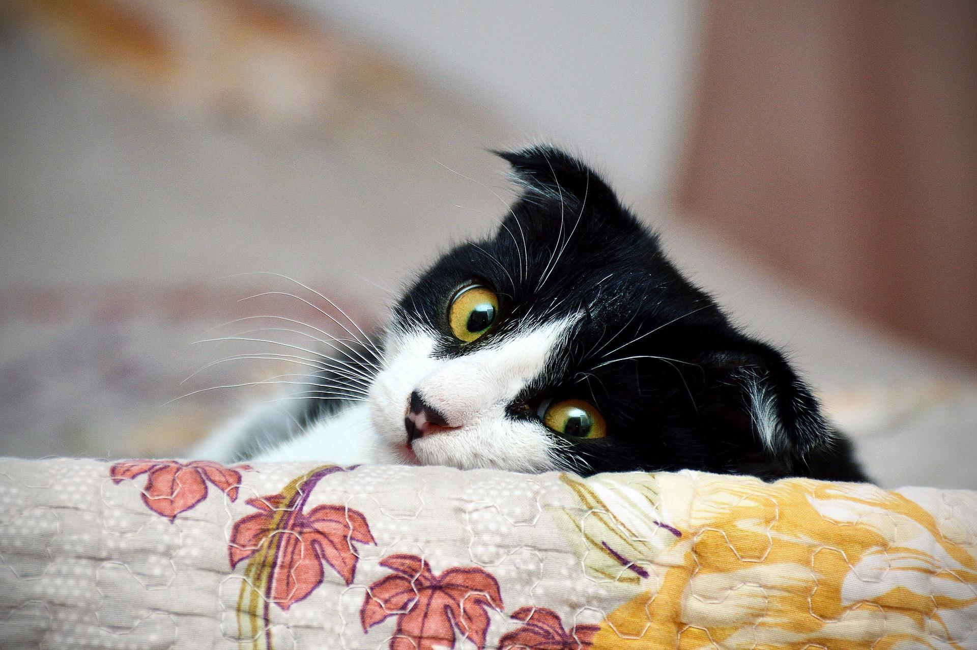 「猫の居る休憩所299」が人気!気になる料金などお店情報を紹介!