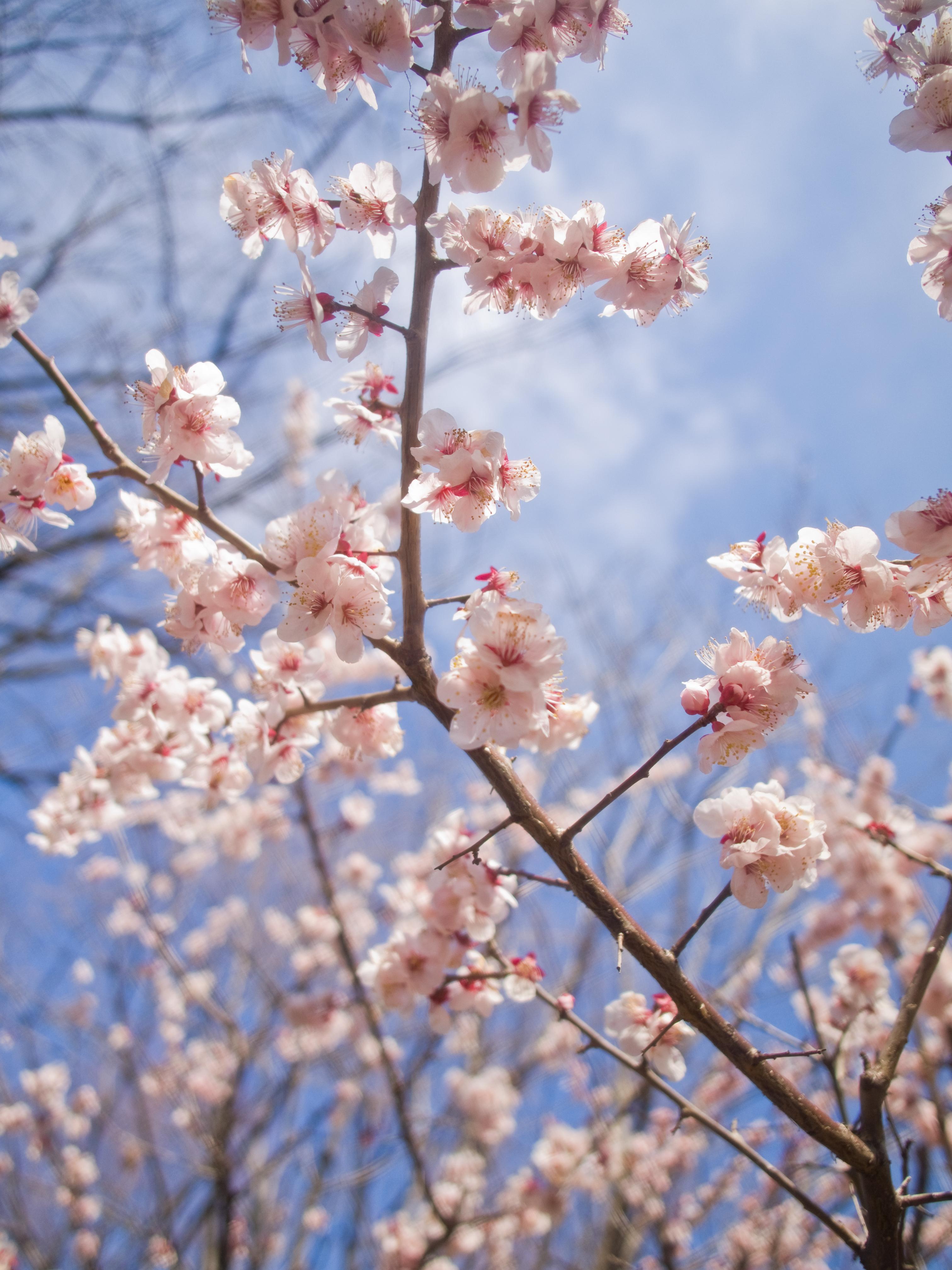 ゆうひの丘(桜ヶ丘公園)で多摩の夜景を楽しもう!おすすめスポットは?