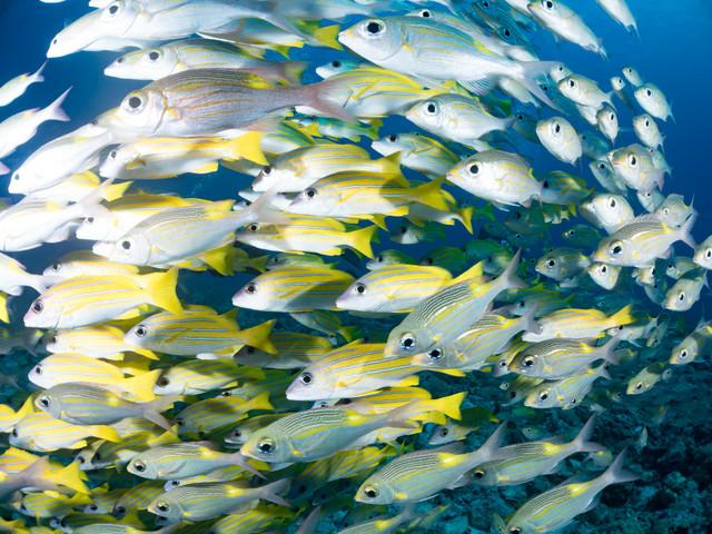 大洗海鮮市場を徹底リサーチ!おすすめの人気店や駐車場情報まとめ