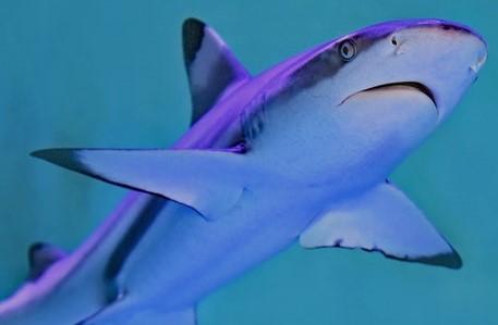 ワールド 水族館 割引 大洗 アクア