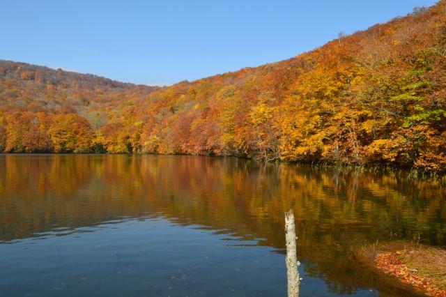 蔦沼(つたぬま)は青森が誇る秘境!紅葉の見頃・温泉・アクセス方法などは?