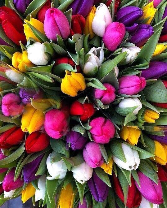 那須フラワーワールドで四季折々の花を満喫!チューリップなどの見頃は?