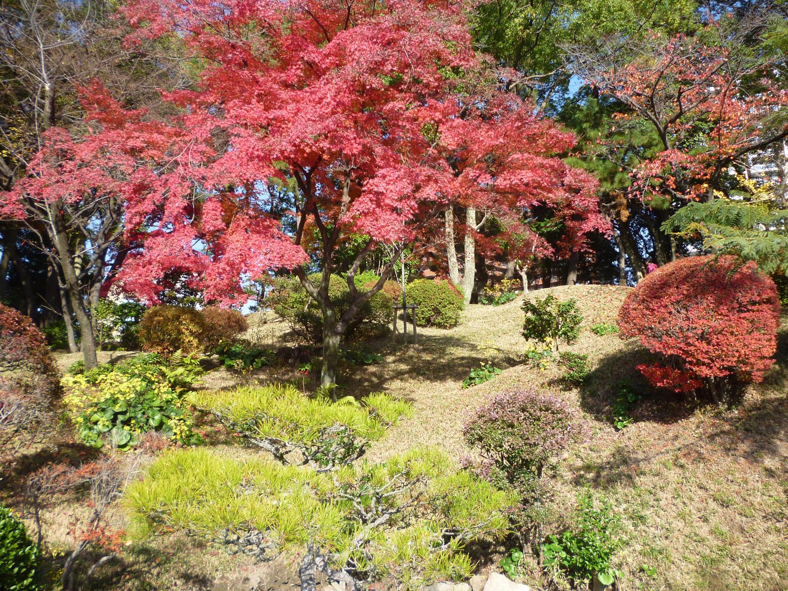 広島「縮景園」は紅葉や夜桜のライトアップが幻想的!駐車場やアクセスは?
