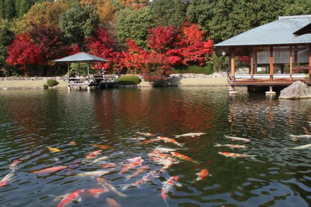 三景園は広島空港そばの日本庭園!紫陽花や紅葉の見頃時期が観光におすすめ!