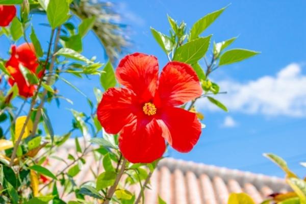 「カフェくるくま」は沖縄旅行で外せない!絶景を見ながらのランチは最高!