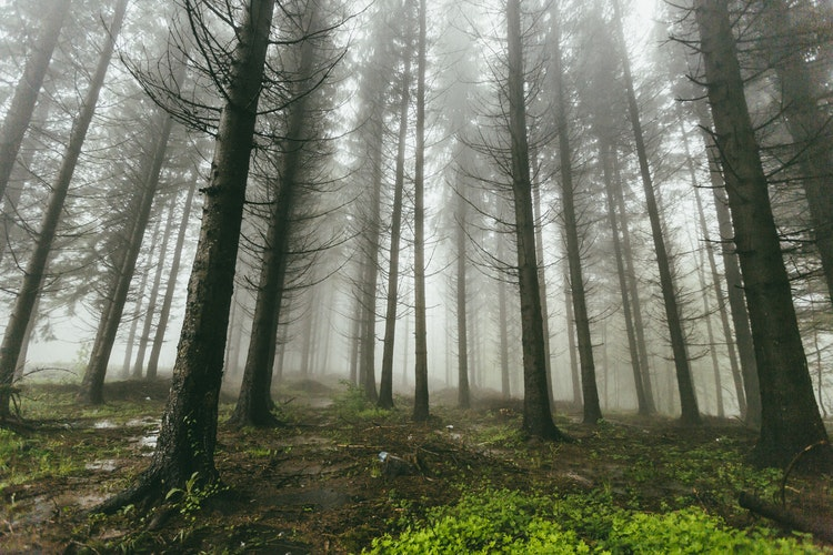 忘憂森林は台湾で噂の絶景スポット!観光客にも人気の秘境を徹底リサーチ!