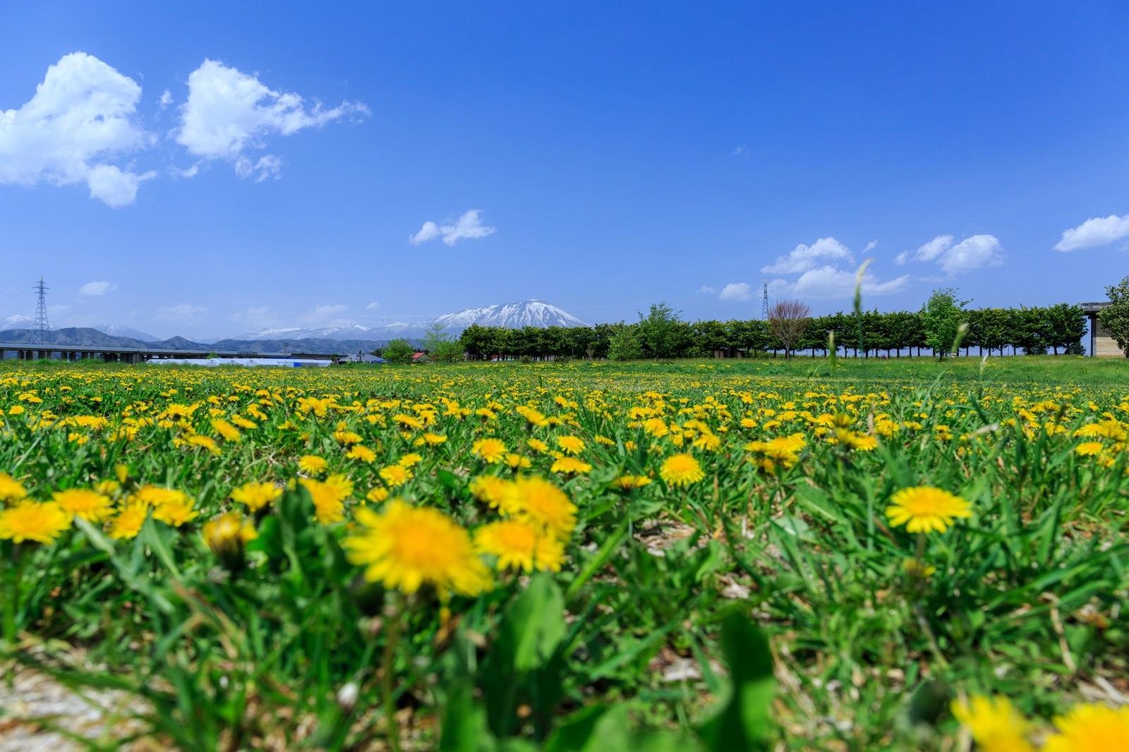 「あわじ花さじき」は兵庫・淡路島の絶景スポット!見どころや料金は?