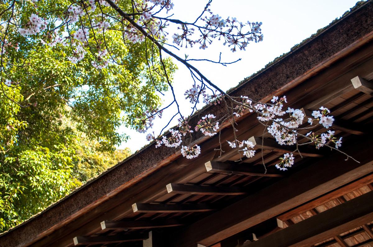 山名八幡宮は高崎の有名パワースポット!境内のパン屋やカフェも人気!