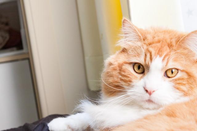 吉祥寺プティット村の入場料&アクセスまとめ!話題の猫カフェも徹底調査!