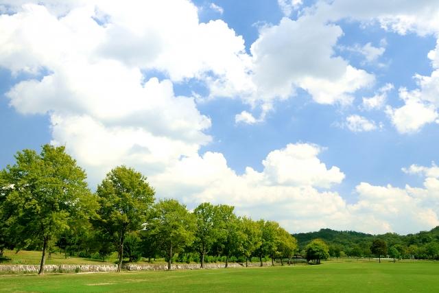 引地川親水公園は人気の公園!ドッグラン・水遊び・花見など楽しみ方いろいろ!