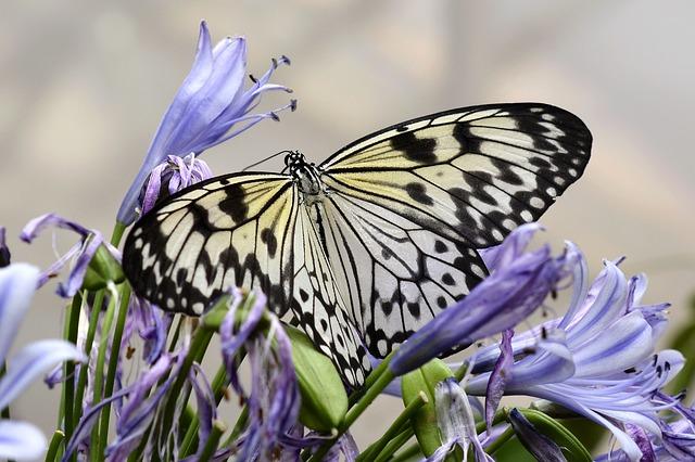 琉宮城蝶々園は沖縄のおすすめ観光スポット!南国の蝶と植物に触れ合える!