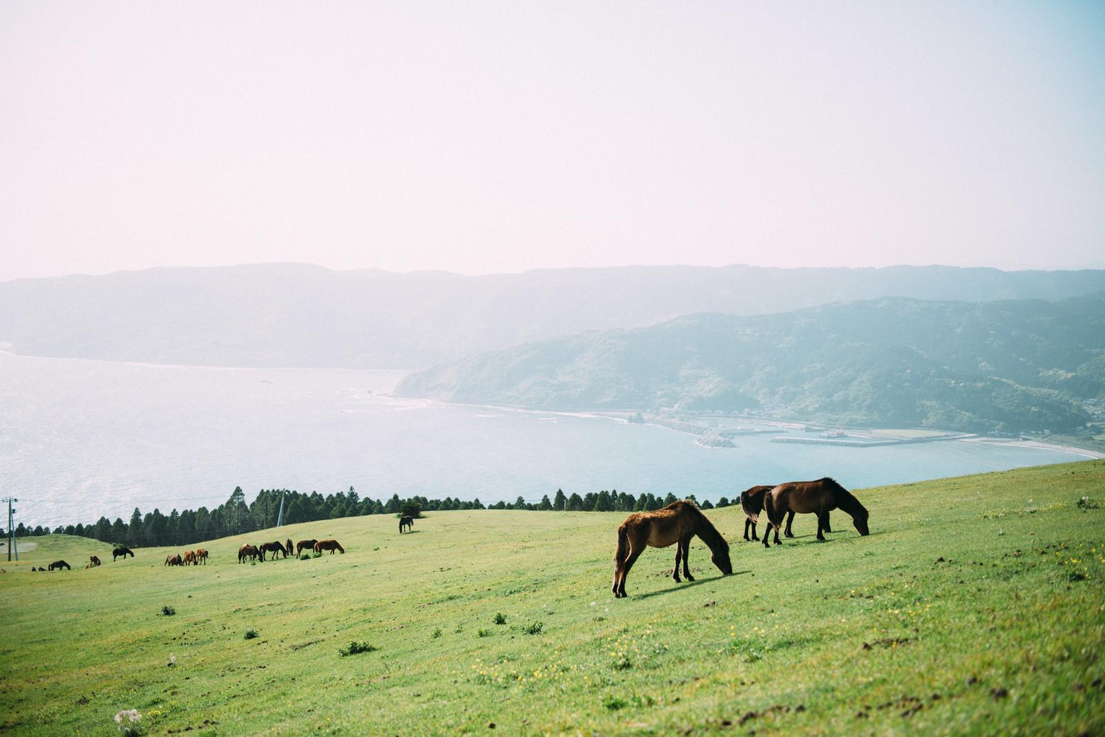 尻屋崎は青森のおすすめ観光スポット!開放的な馬の様子を見ながらのんびりしょう