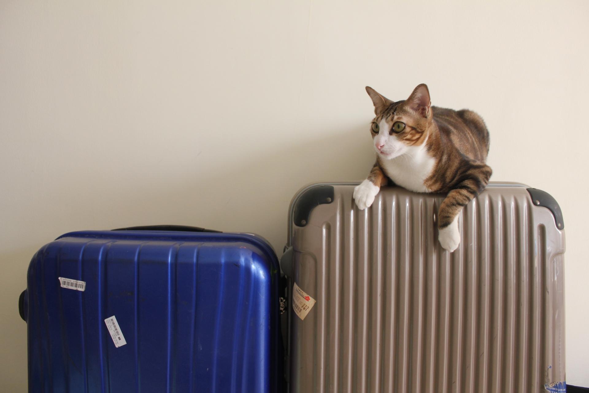 猫と泊まれる宿ランキングTOP17!エリア別におすすめスポットをご紹介!