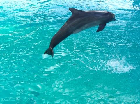 三重で人気の水族館まとめ!可愛い動物に癒される動物園もご紹介