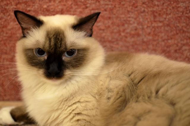 梅田の猫カフェおすすめ7選!安い料金で抱っこができる癒しスポットは?