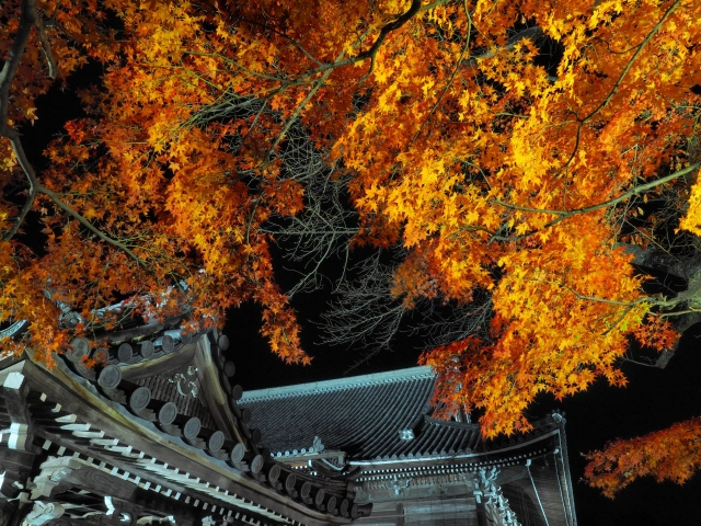 西教寺を散策して景色を堪能!4つの異なる庭園は見所満載!