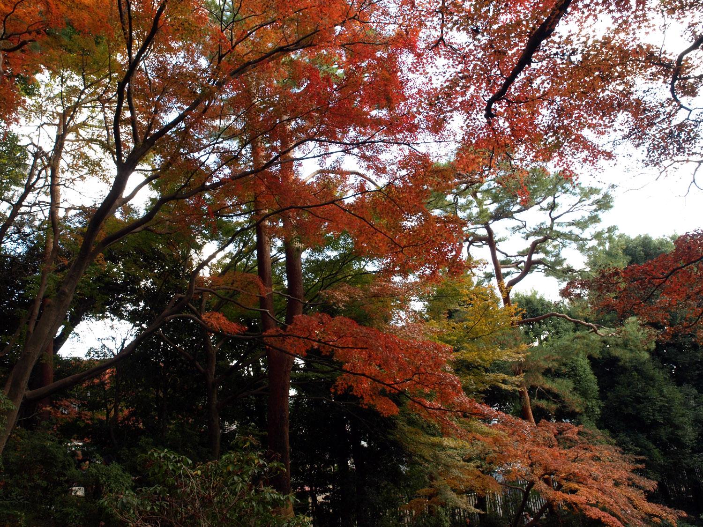 百済寺は滋賀の有名な寺院!御朱印・アクセス・駐車場をまとめて紹介!