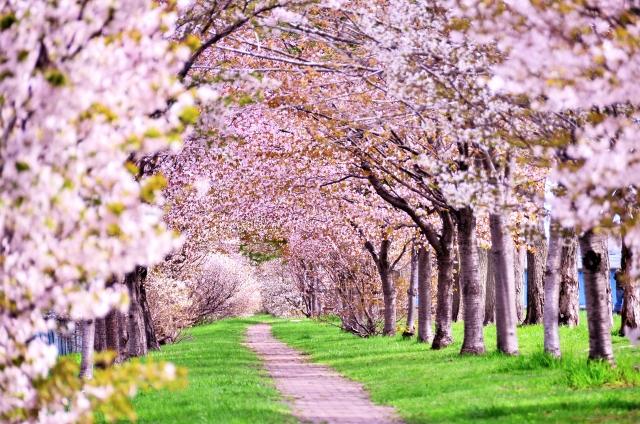 石ケ谷公園は明石の桜の名所!遊具やバーベキューも楽しめるおすすめスポット