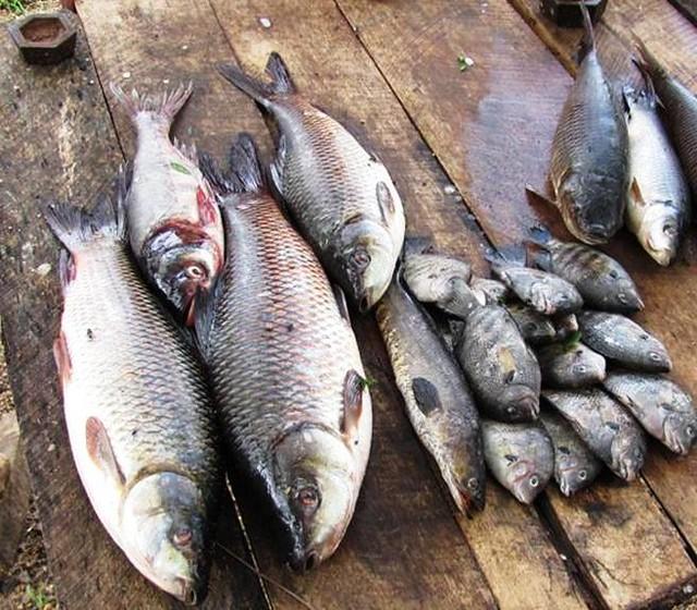 五目釣りをマスターして爆釣しよう!仕掛けや釣り方についても徹底リサーチ!