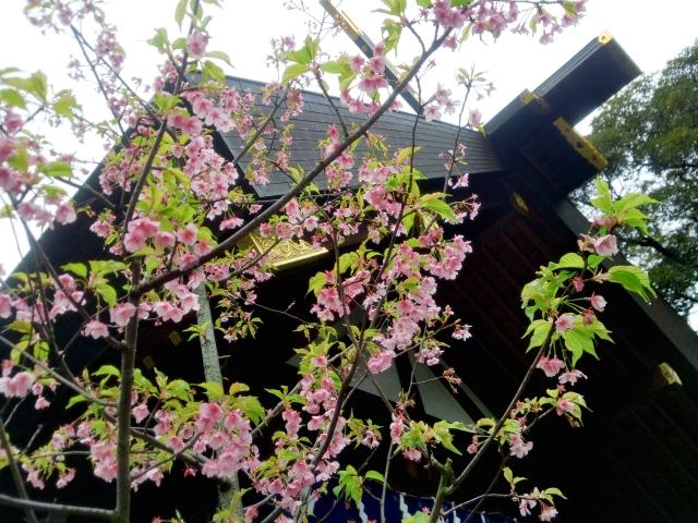 桜神宮は恋愛成就のご利益で有名なスポット!季節限定の御朱印も人気!