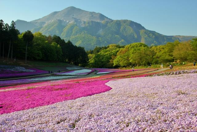 秩父で桜を満喫できるおすすめスポットは?一度は行きたい人気の場所を紹介!
