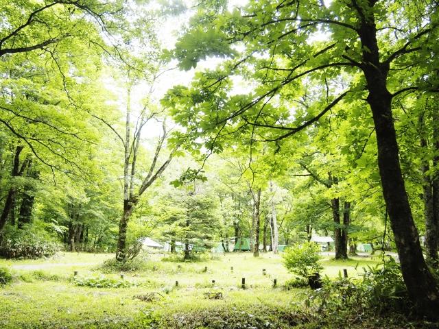 旭川周辺のキャンプ場でアウトドアを満喫!無料で楽しめる穴場や人気スポットも!