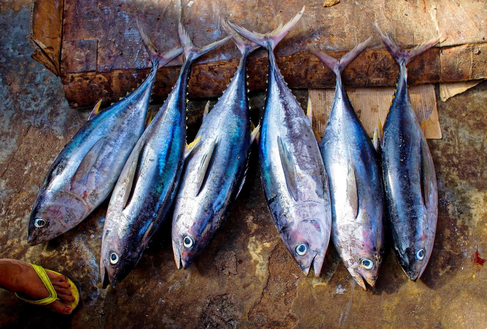 塩釜水産物仲卸市場は新鮮魚介が揃う人気スポット!食事や買い物を楽しもう