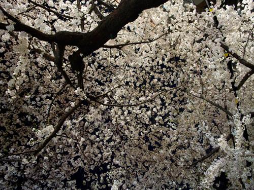 金峯山寺は奈良吉野山のパワースポット!御朱印・ご利益・見どころなど一挙紹介