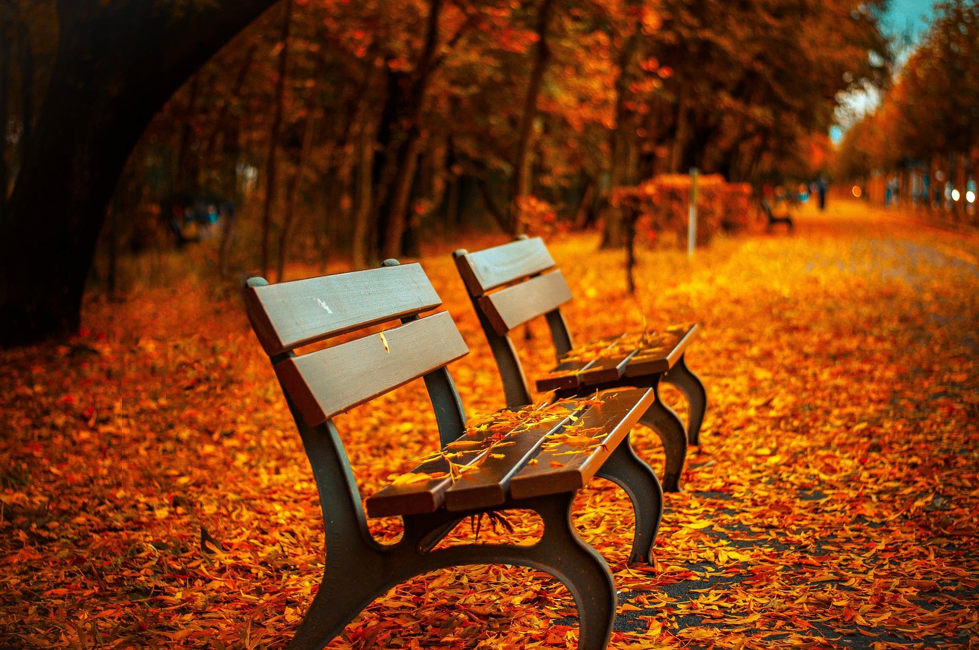 中目黒公園でピクニックや自然を楽しもう!子供も喜ぶおすすめの憩いの場所!