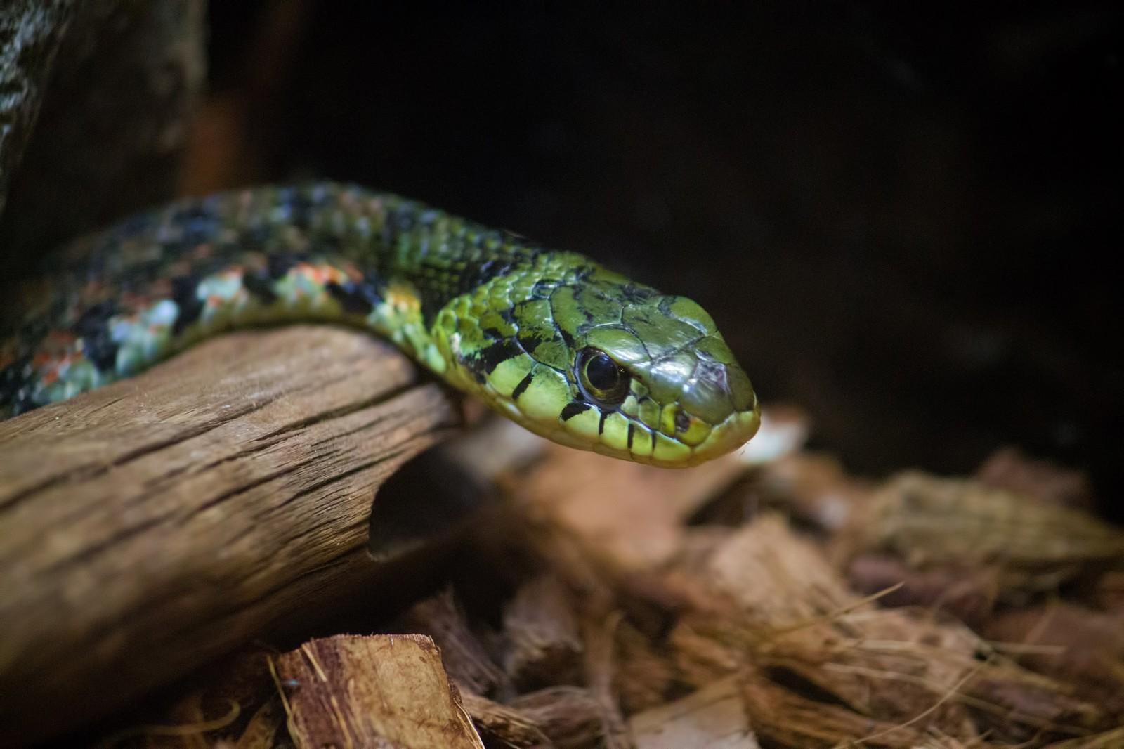 ジャパンスネークセンターはヘビ好きが喜ぶ穴場スポット!口コミ・アクセス方法は?