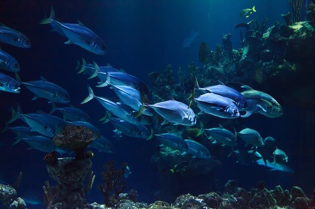 上越市立水族博物館「うみがたり」の混雑状況は?見どころもチェック!