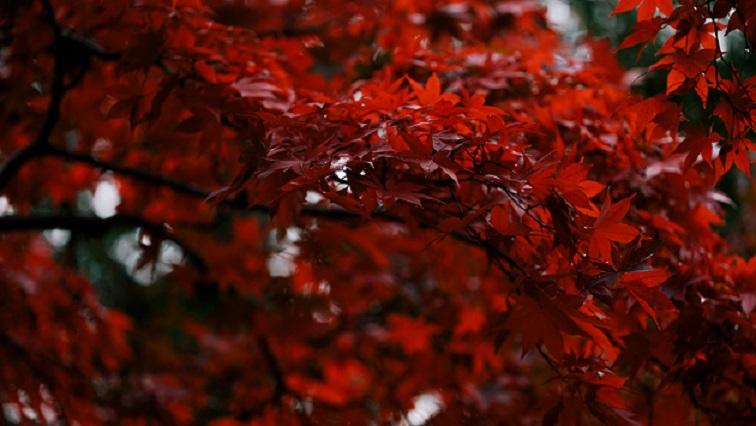長円寺(長野)は紅葉が綺麗な観光スポット!御朱印やライトアップ情報も!