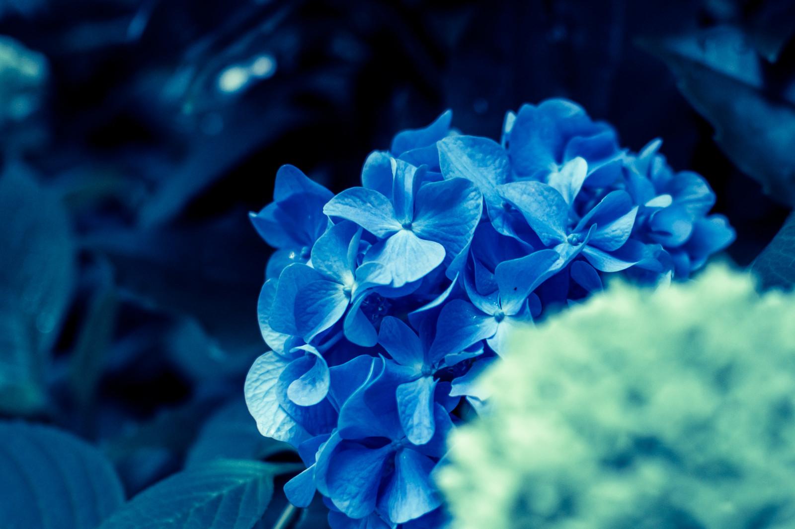 雲昌寺は秋田のあじさいの名所!青一色に染まる絶景を見に行こう!