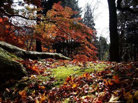 環境芸術の森は唐津市の紅葉の名所!見頃をチェックしてインスタ映えを狙おう!