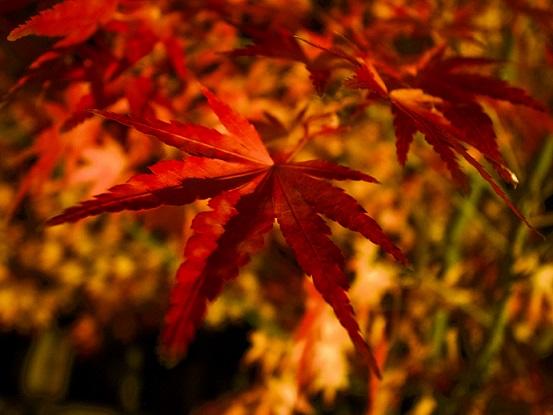 柿其渓谷は南木曾町の秘境!紅葉や牛ケ滝など見どころがたくさん!