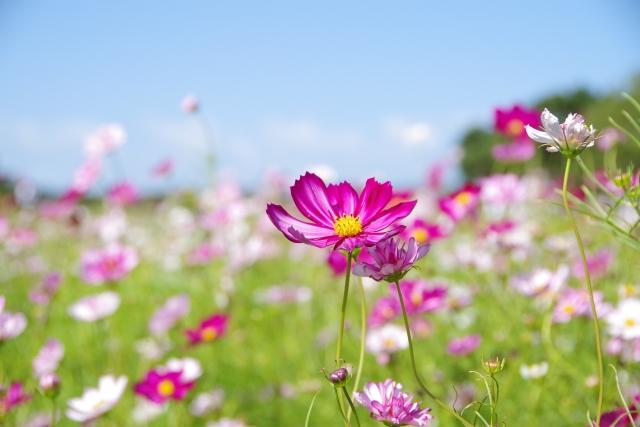 東武トレジャーガーデンで花々に癒されよう!見頃の時期やアクセス方法も!
