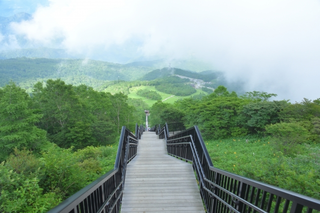 日光の霧降高原は絶景の観光スポット!ドライブや人気のランチを楽しもう